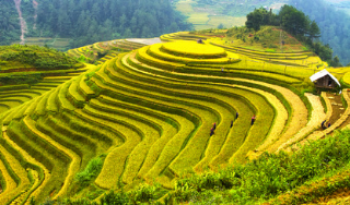 Vietnam Guided Tours
